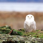 プロバードウォッチャー「♪鳥くん」が教える、カナダのバードウォッチング事情とその楽しみ方