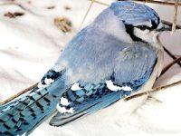 カナダの野生動物・野鳥