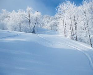 白く覆われた樹氷の間を 駆け抜けよう!!