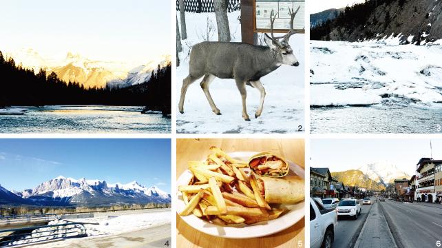 1 雄大なロッキー山脈の景色 2 たまたま遭遇したたシカ 3 静かに流れ落ちるボウ滝 4 車から望むロッキー山脈 5 ホステルで食べた野菜と鳥肉のロール  6 バンフのダウンタウン