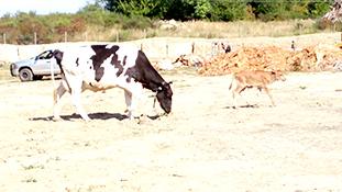 farm-stay-03