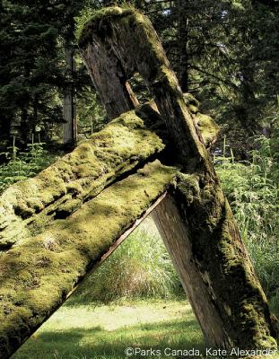 残されたハイダ族住居の跡