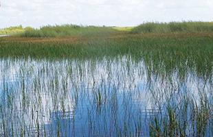 エバーグレーズの湿地帯