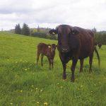 【食材を探る・牛】Ontario Wagyuオーナー Brian Knoxさん インタビュー