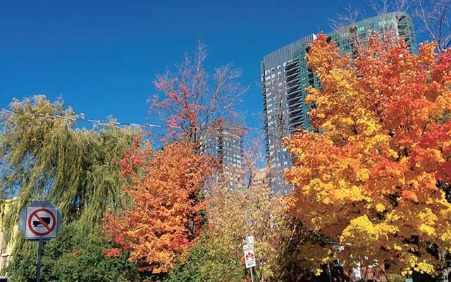 Toronto(Finch) @sumdayoo