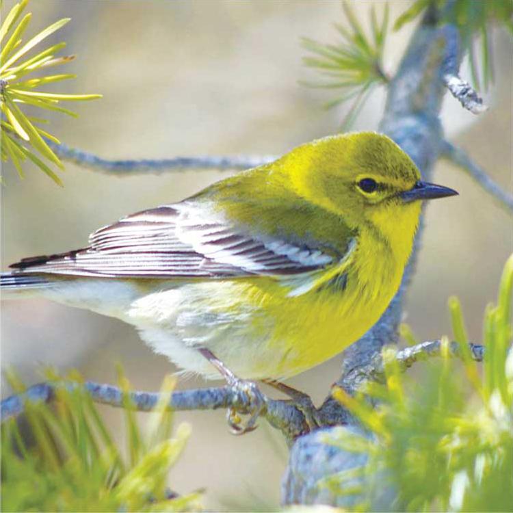 birdwatching05