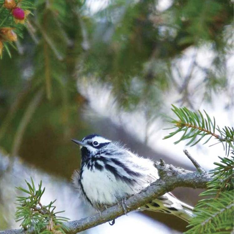 birdwatching08