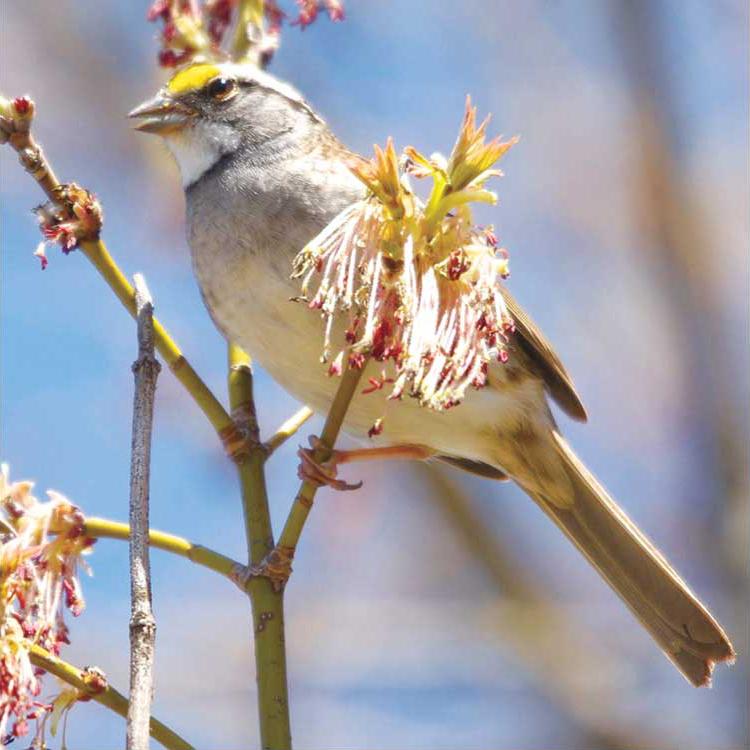 birdwatching11