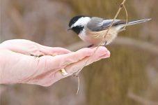 冬こそバードウォッチング!トロントでこの冬見つけたい人気野鳥10選