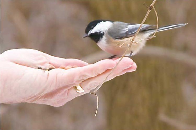 birdwatching12