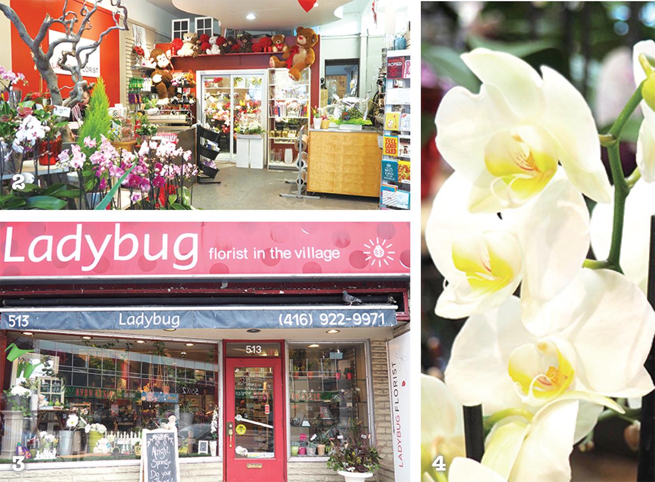 2 季節やイベントごとに装飾が変わる店内 3 てんとう虫模様の看板が目印! 4 イベント、贈り物に
