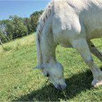 動物たちの保護区 Ralphy's Retreat Animal Sanctuaryで学ぶ 動物愛護ボランティア体験レポート