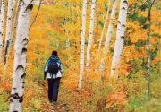 今から秋の旅計画!クルマでアクセスできる おすすめの紅葉エリアを紹介|特集「残りわずかな夏に押さえておきたいトロント8トピック」