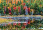 秋の森のいとなみ|オンタリオ州・アウトドアの魅力。楓の森の歩き方 第54歩