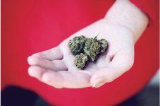 カナダから見るマリファナ合法化のあと|大麻のいま
