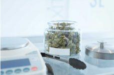 新たに米ニューヨーク州でも大麻合法化の動きが活発化。カナダの平均価格は17%増|カナダから見るマリファナ合法化のあと