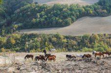イタリア(11)トスカーナ巡り(5):最後の日 ― シエナへ|紀行家 石原牧子の思い切って『旅』第36回