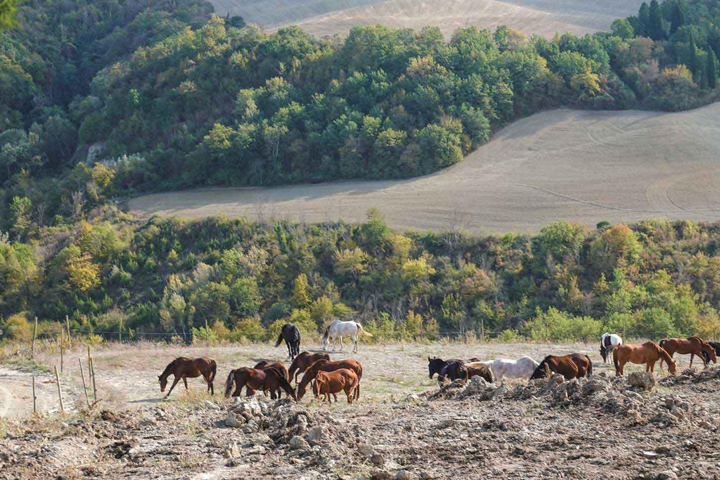 優雅に広い草原に放たれた馬達