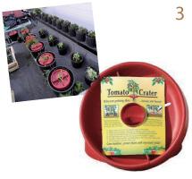 tomato-crater