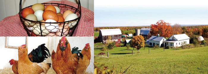 kingsholm-farm-01