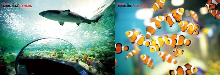 ripleys-Aquarium-of-Canada