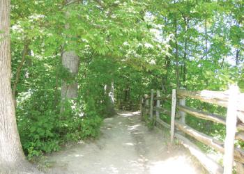 手入れされた歩きやすいハイキングコース