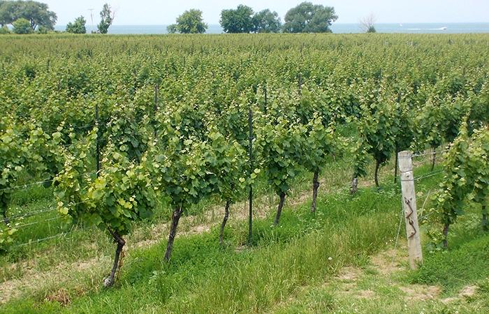 konzelmann-estate-winery-01