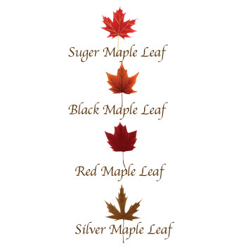maple-syrup-03
