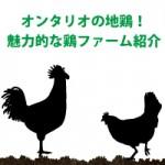 オンタリオの地鶏!魅力的な鶏ファーム紹介