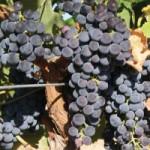 ワインビギナーのためのワインの基礎知識