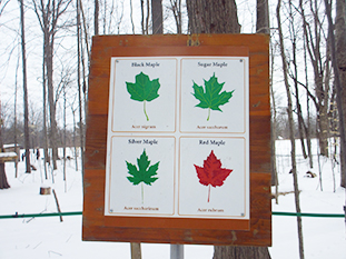 maple-syrup-festival-08