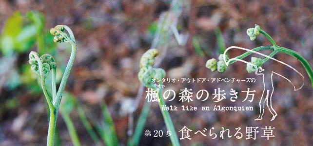 ontario-outdoor-adventures-20-01
