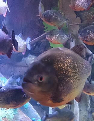 aquarium-04