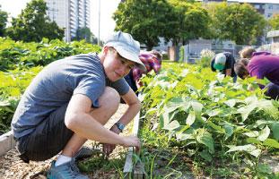 学校菜園での収穫