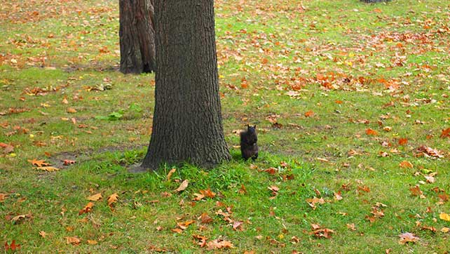 white-squirrel-01