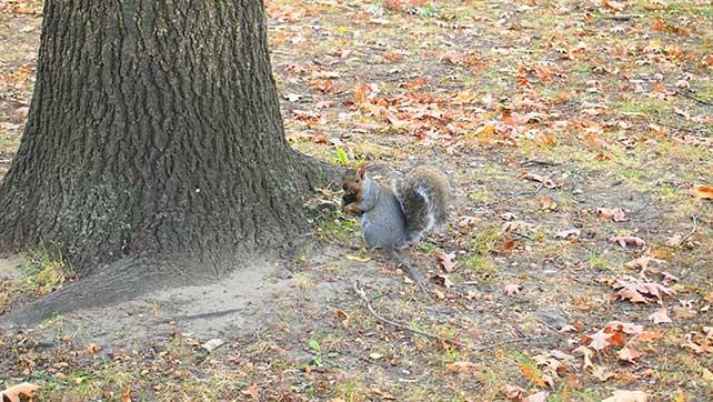 white-squirrel-02