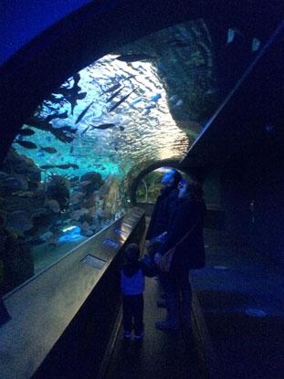 sushi-sometime-aquarium-04