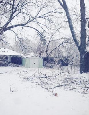 2013年暮れのフリージングレインで庭の樹木が被害に遭った