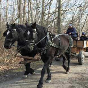公園内を馬車で回ったり優雅な休日。