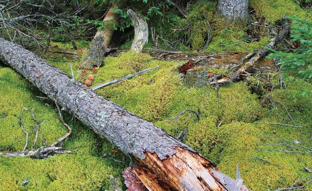 朽ちた木に茸や苔の生える手つかずの原生林