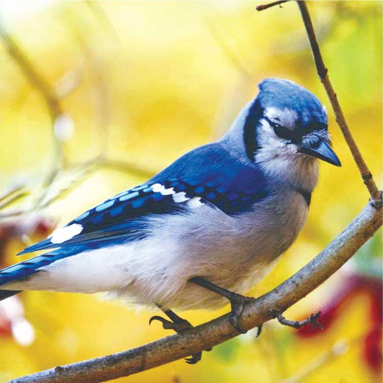 birdwatching02