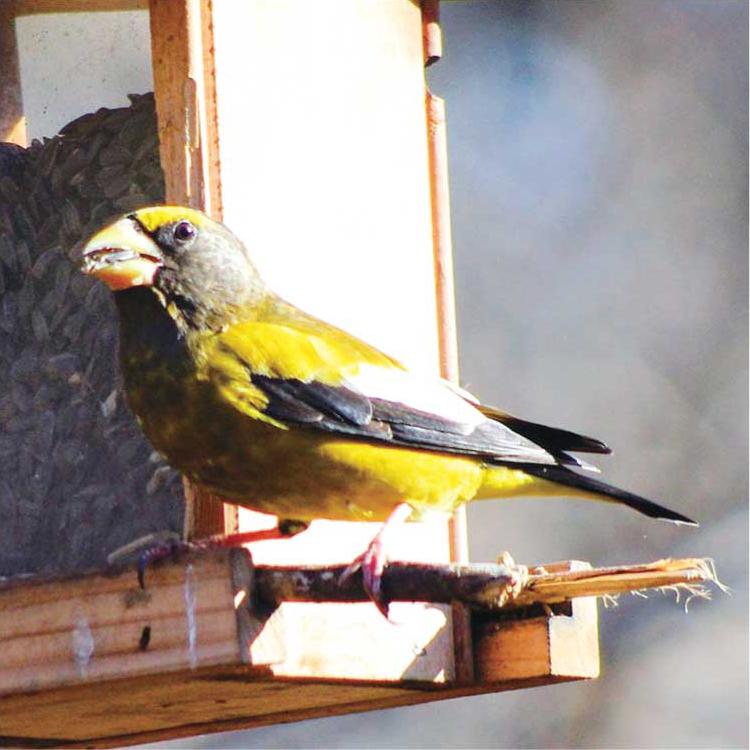 birdwatching03