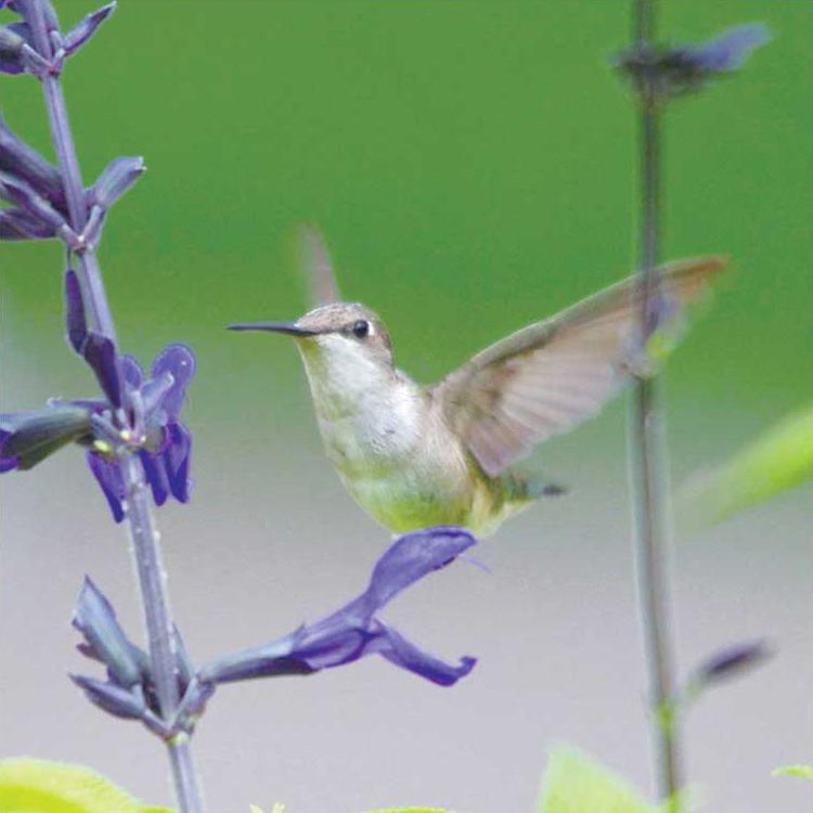 birdwatching10
