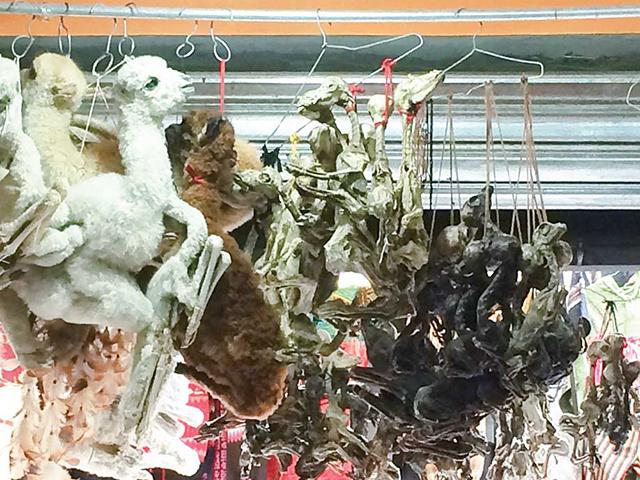 魔女通り、動物の胎児のミイラを売る店