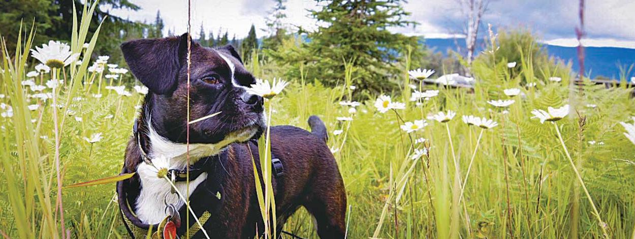 草原を自由に駆け回るSasha @Wells Grey, British Columbia