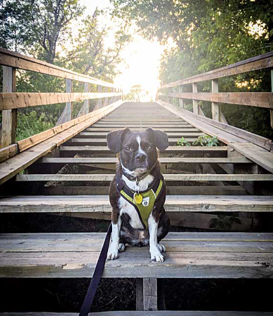 私の一番のハイキングパートナー、愛犬Sasha