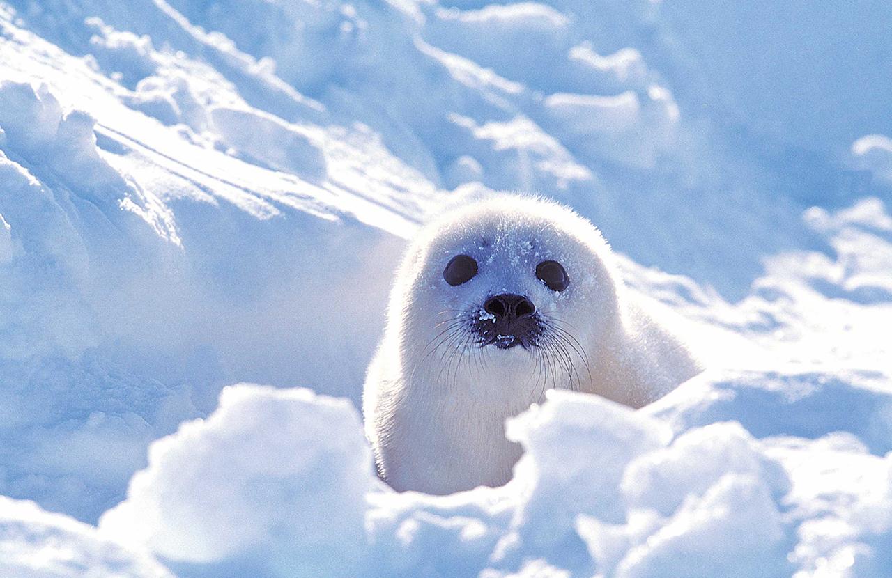 seal-tour01