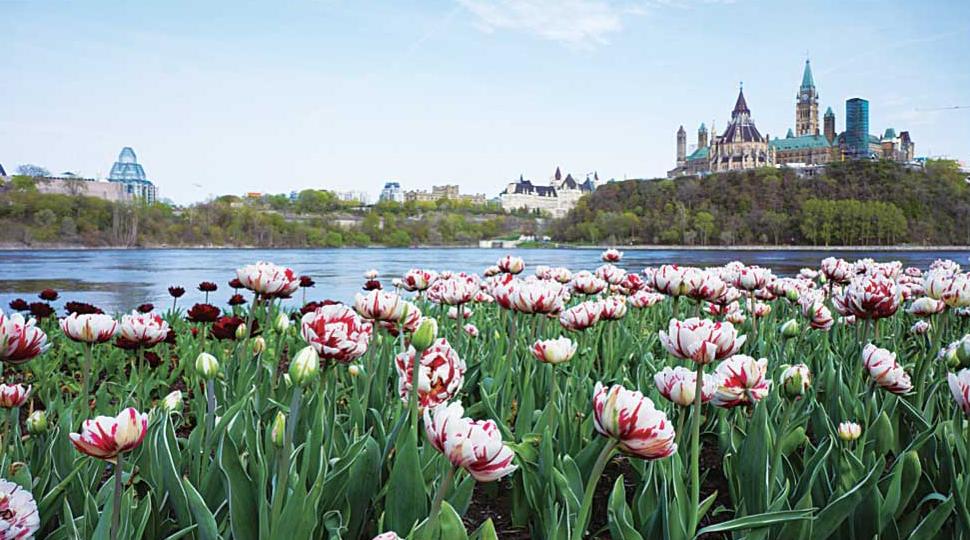 カナダ歴史博物館から観るパーラメントヒル