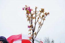 ウッドバイン・パークにて桜の植樹式を開催