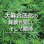 大麻合法化の 背景や狙い、そして期待|特集「カナダ・マリファナ合法化」